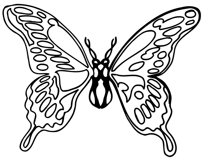 Monarch Butterfly clipart black and white #7
