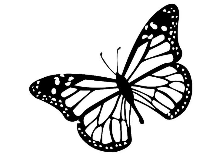 Monarch Butterfly clipart black and white #10