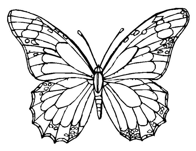 Monarch Butterfly clipart coloring book Kids  butterfly color sheet