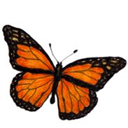 Monarch Butterfly clipart female For kids Bugs butterfly lesson