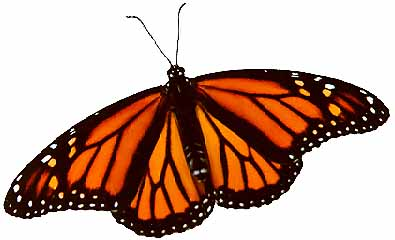 Monarch Butterfly clipart female & Female Illustrations Monarch Butterfly