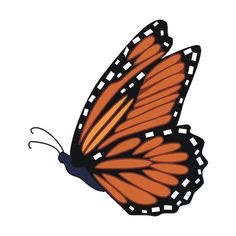 Monarch Butterfly clipart female ❤ ~ Weed liked tuberosa