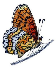 Monarch Butterfly clipart nature #5