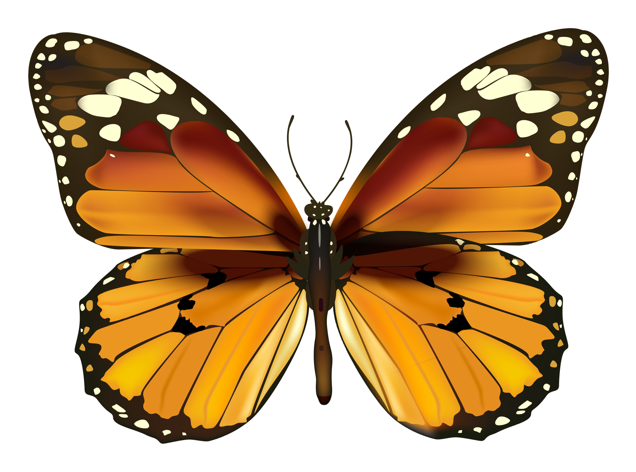 Gallery clipart yellow butterfly Even I of a a