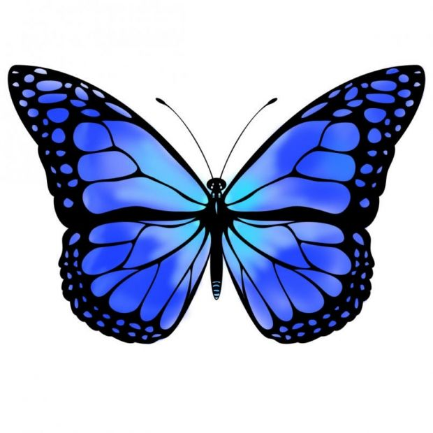 Monarch Butterfly clipart one #10