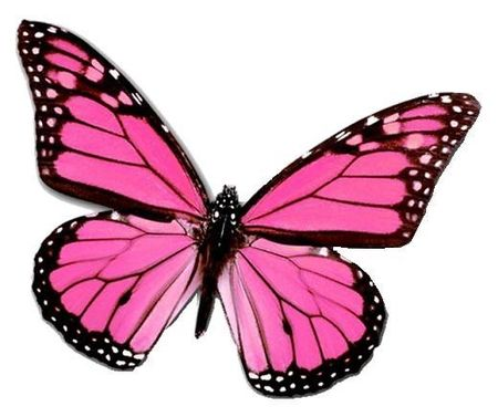 Monarch Butterfly clipart pink Art images Pinterest Pink Creation