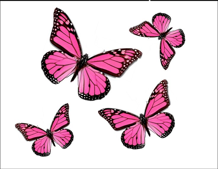 Monarch Butterfly clipart pink Images 75 Pinterest Search best