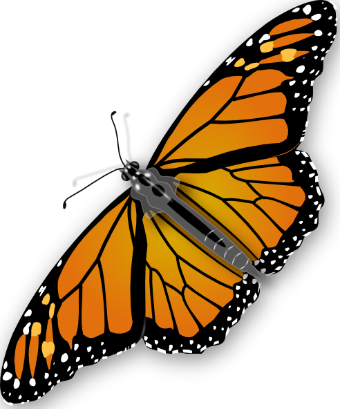 Butterfly clipart animated Download clip at this online