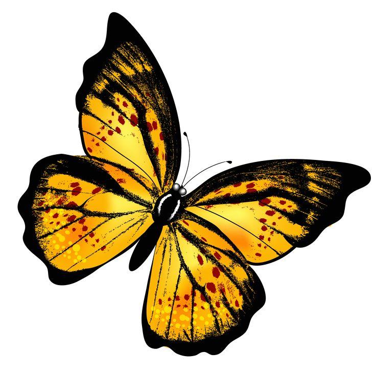 Monarch Butterfly clipart sideways #3