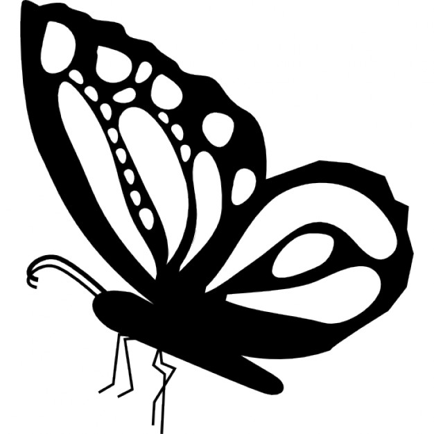 Drawn butterfly side view Ornamental detailed wings Butterfly with