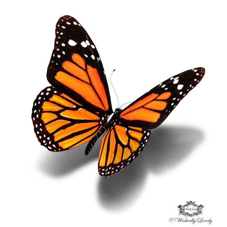 Monarch Butterfly clipart sideways #7