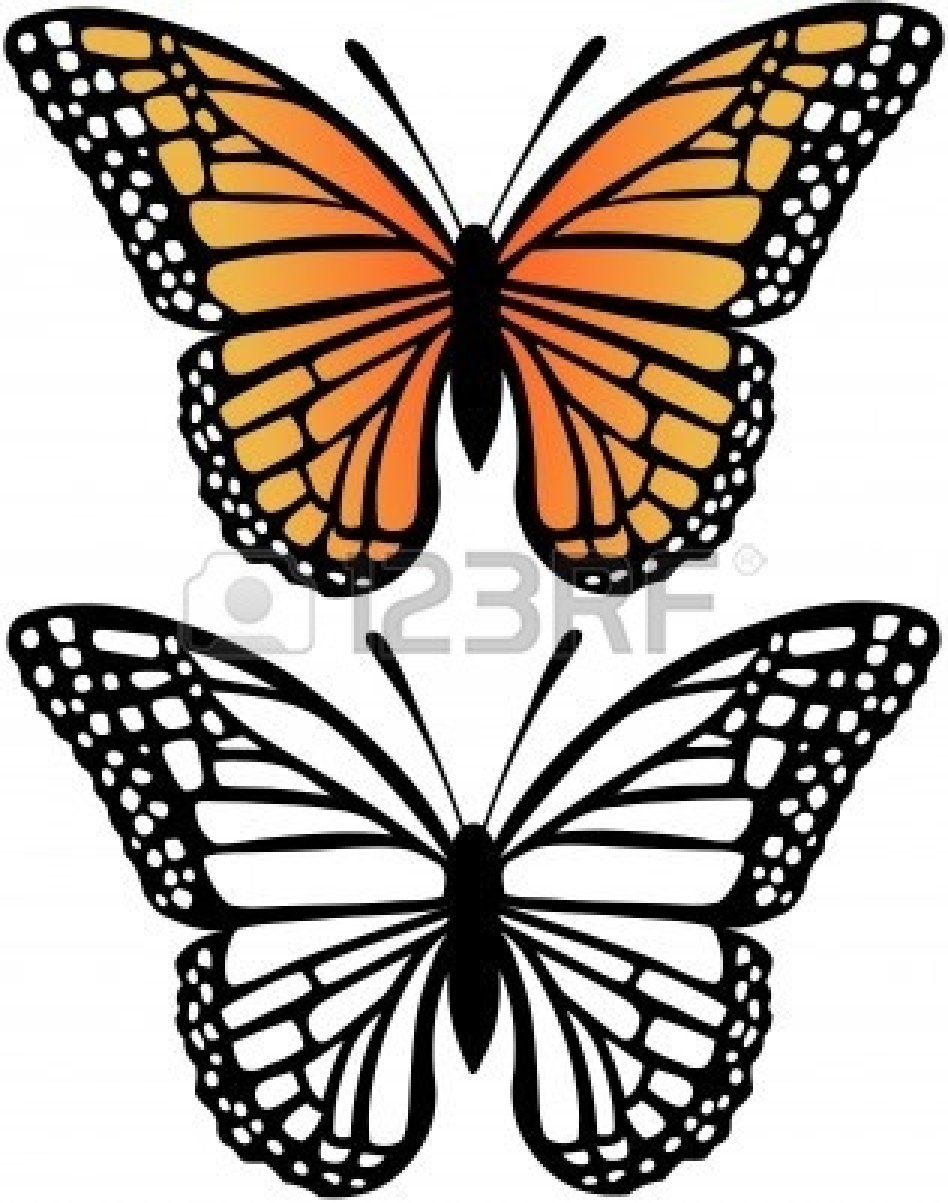 Drawn butterfly butterflie Monarch clip art white