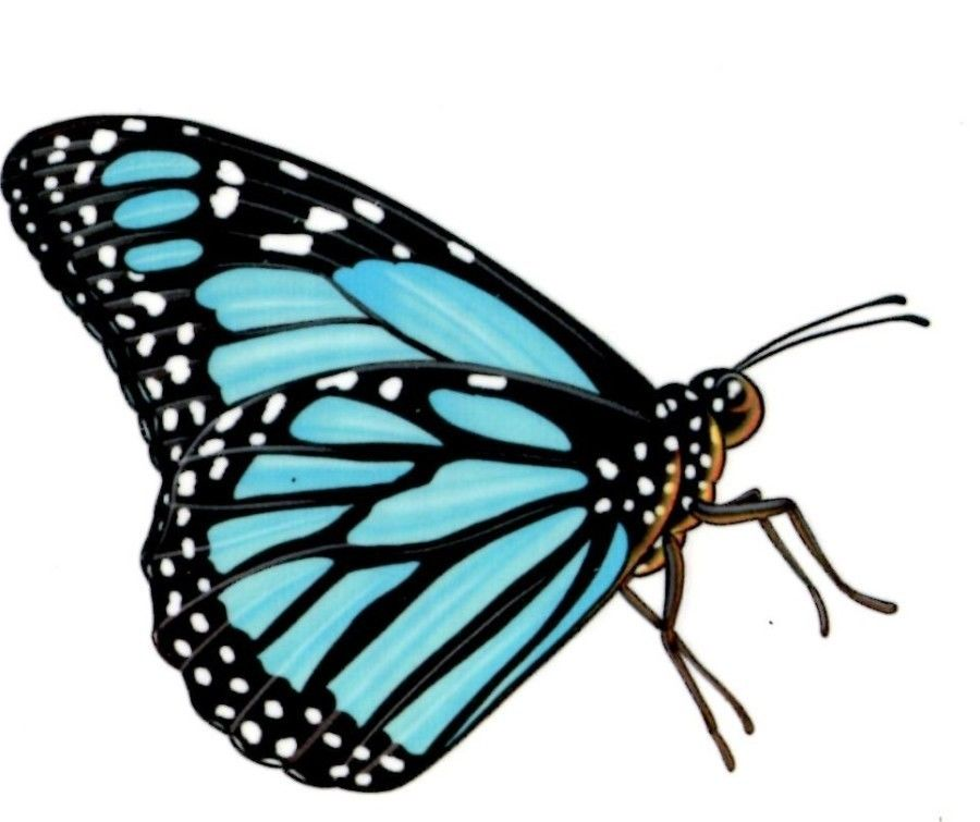 Monarch Butterfly clipart small #12