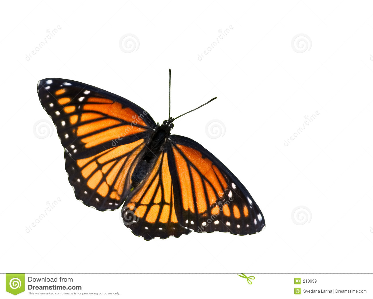 Monarch Butterfly clipart stock #1