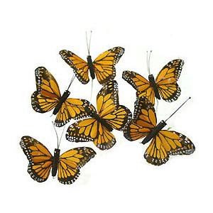 Monarch Butterfly clipart swarm Butterflies Butterflies Polyvore Monarch