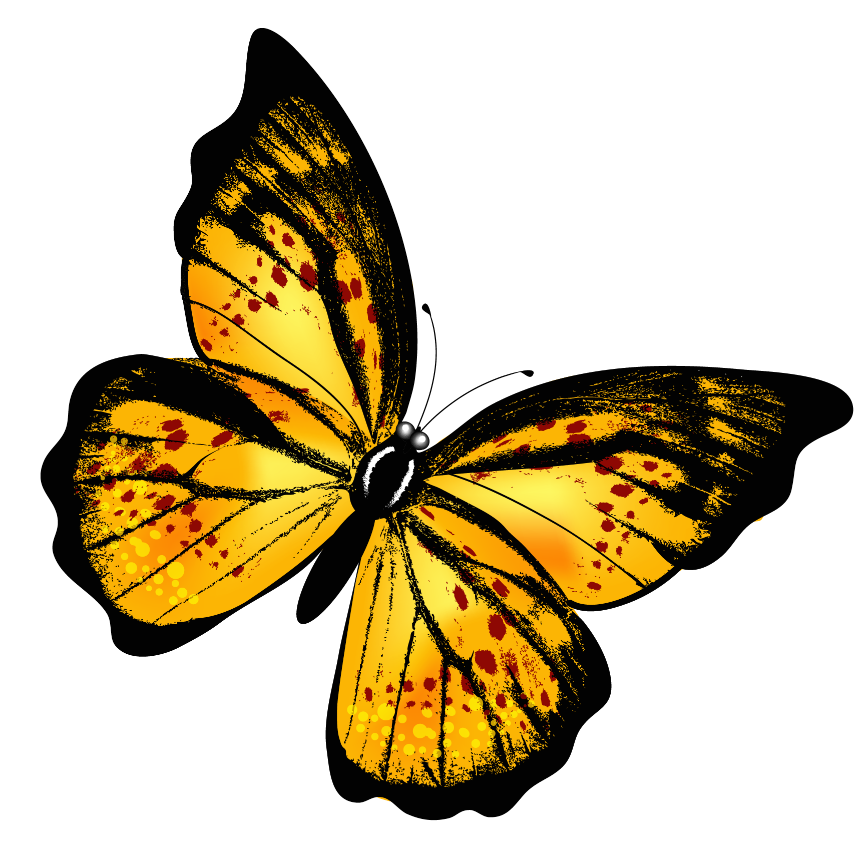Gallery clipart yellow butterfly Butterfly Yellow Clipart  Transparent