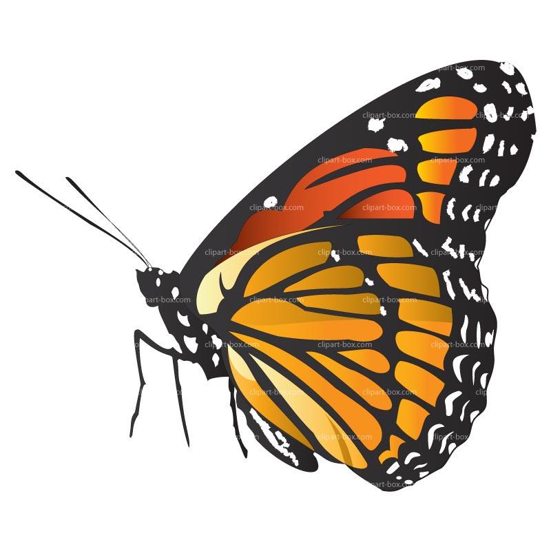 \x3cb\x3eclipart Clipart Monarch Butterfly butterfly