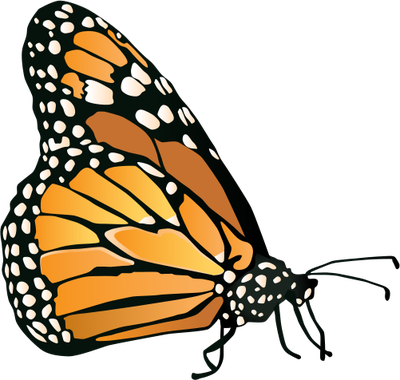 Insects/Arachnids Butterfly) Clip Monarch Danaus