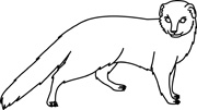 Mongoose clipart Mammal 73 Kb Clipart Size: