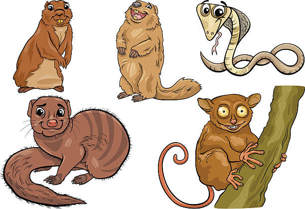 Mongoose clipart Clipart Free Clipart collection Royalty