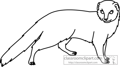 Mongoose clipart black and white Animals Classroom Clipart jpg mongoose_animal_outline_730