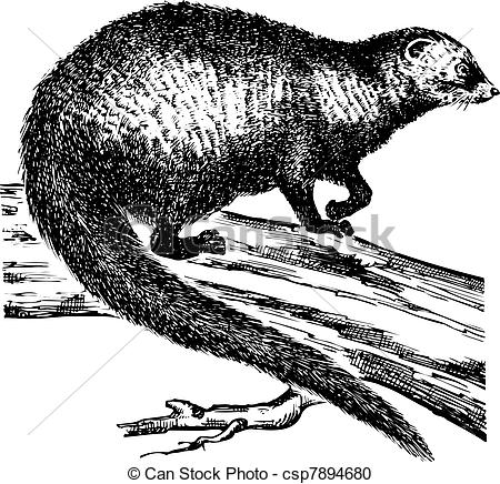 Mongoose clipart black and white  Vector white on branch