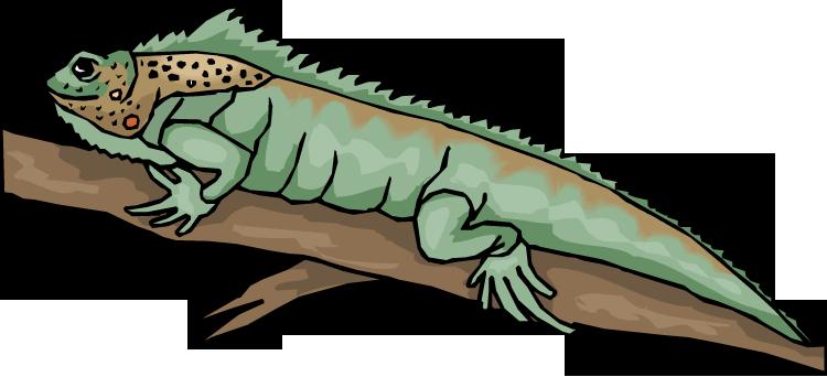 Reptile clipart #8