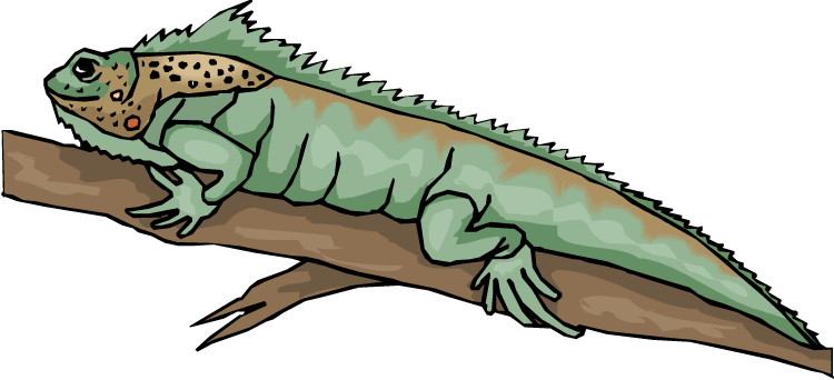 Monitor Lizard clipart Free Clipart lizard%20clipart%20 Clipart Lizard