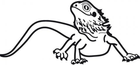 Drawn reptile bearded dragon Vinyl  Window Bearded Decal