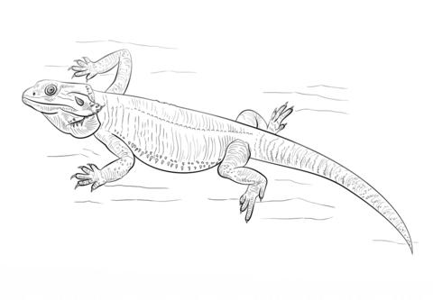 Dragon of Coloring Printable printable