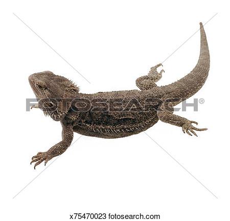#19 dragon 145 #15 clipart