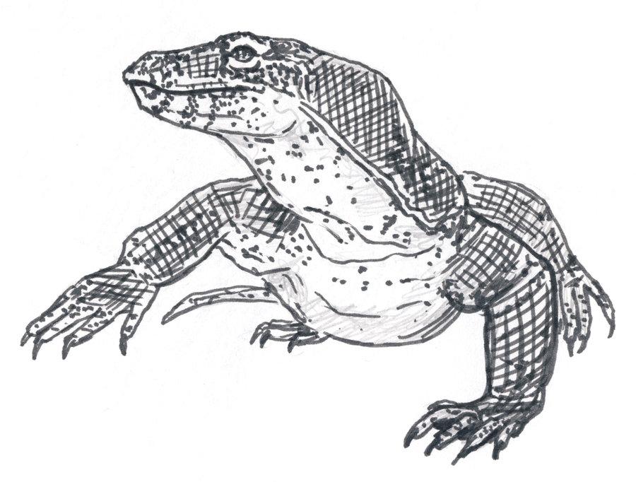 Drawn reptile monitor lizard  Gallery monitor cartoon Image