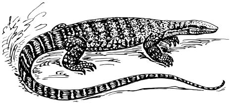 Lizard Clip Art Clipart Download