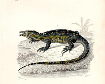 Monitor Lizard clipart newt #6