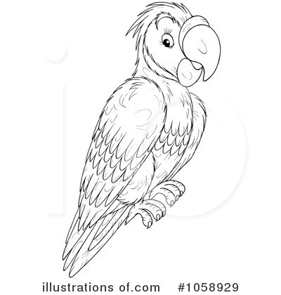 Monochrome clipart parrot And And Art Black art