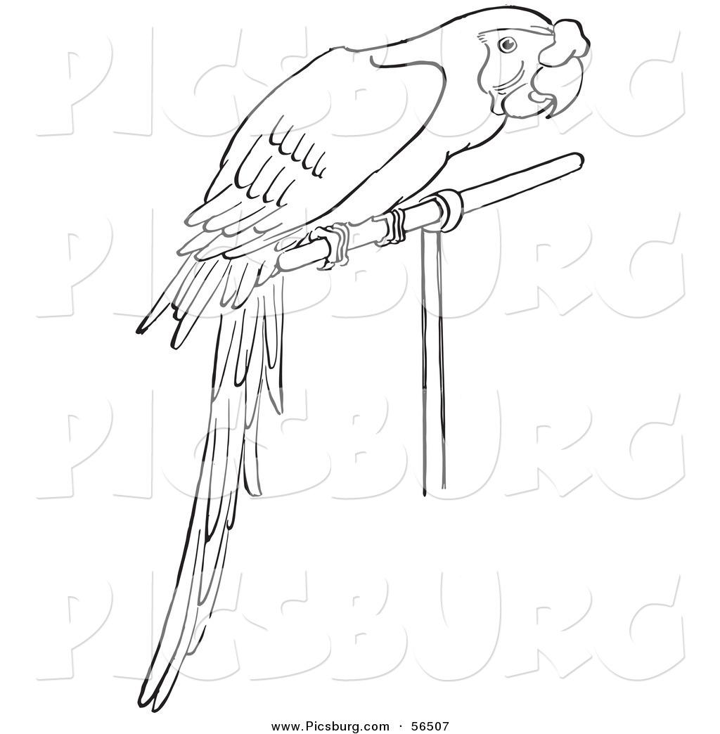 Monochrome clipart parrot Art Caged Art a of