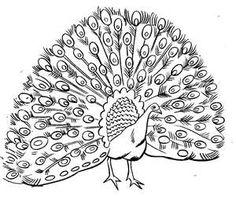Black & White clipart peacock Clipart Peacock Animation Clipart Peacock