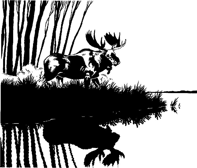 Moose clipart scene #3