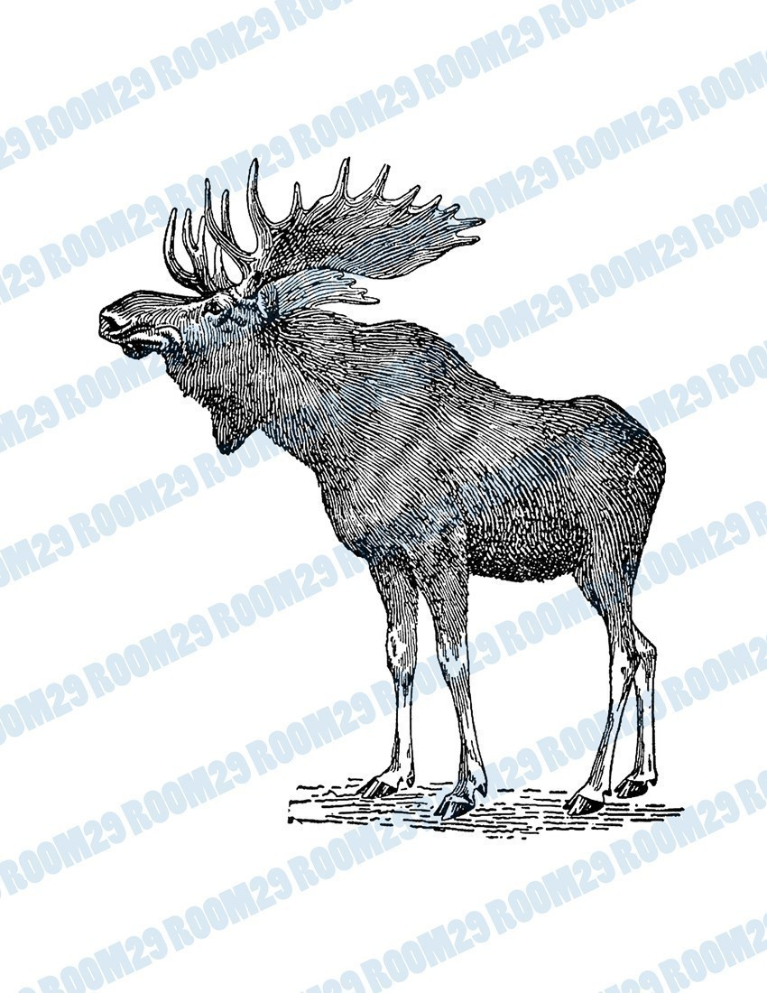 Moose clipart ear Download Illustration  file Moose