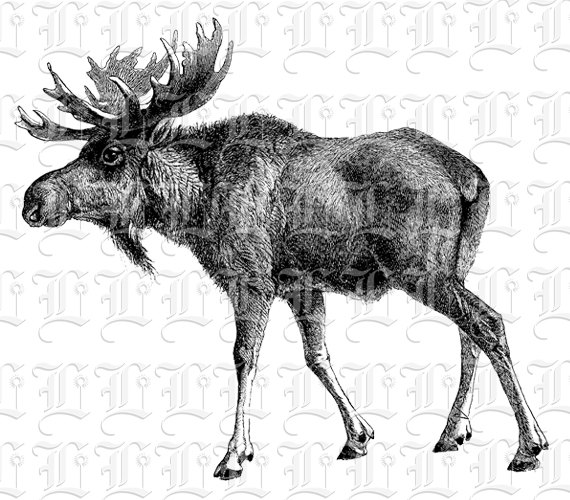 Moose clipart vintage #7