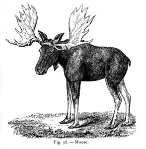 Moose clipart vintage #5