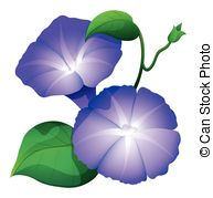 Morning Glory clipart 262 flower  glory color