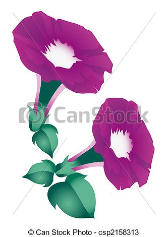 Morning Glory clipart And Flowers glory Morning Illustrations