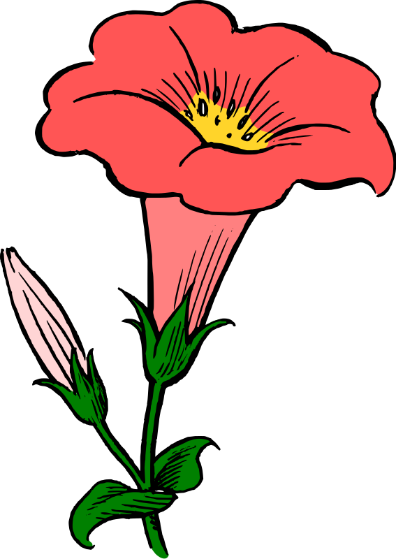 Morning Glory clipart Clip Clip  Morning Glory