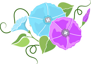 Morning Glory clipart lavender Panda Glory Info Images Clipart
