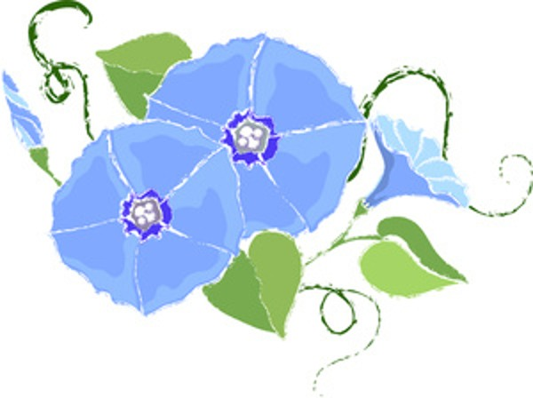 Morning Glory clipart Flower clip Morning Search