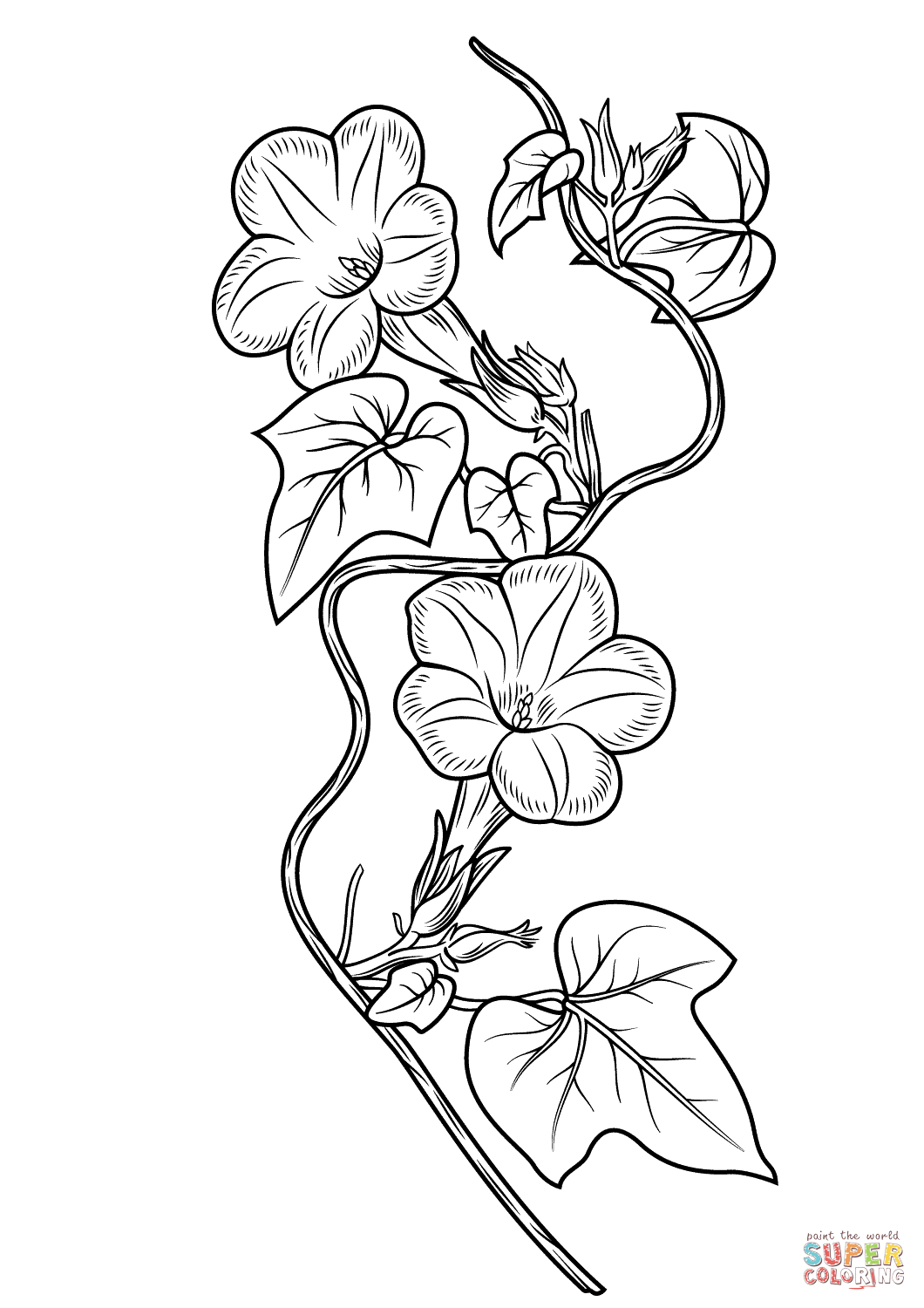 Morning Glory clipart black and white Glory Free Printable Morning Coloring