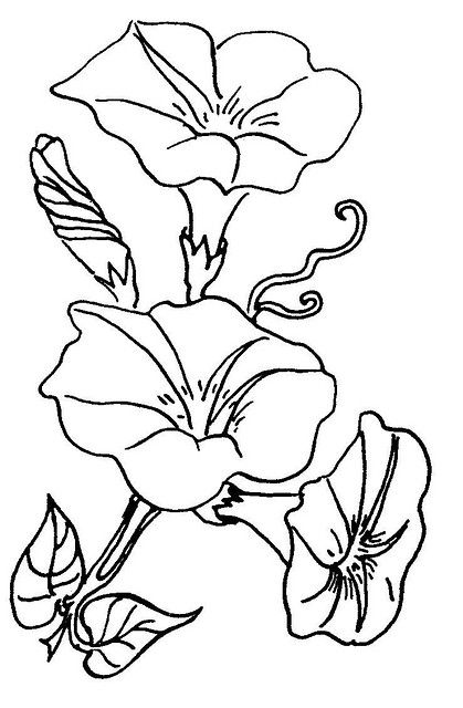 Morning Glory clipart black and white Best images flowers glory Glory