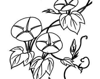 Morning Glory clipart black and white Clear Etsy acrylic Morning //