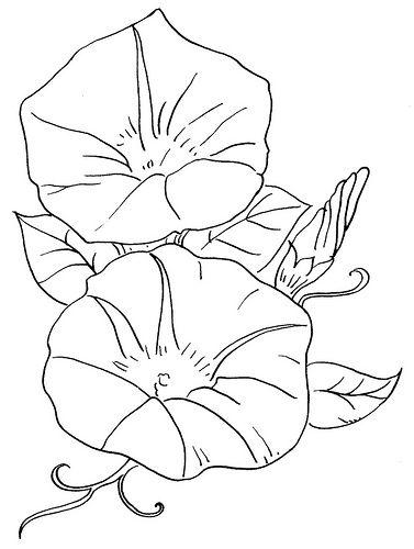 Morning Glory clipart black and white 25+ Hummingbird  tattoo flowers
